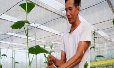 Lão nông U70 làm giàu trên đất sương muối nhờ trồng xen canh